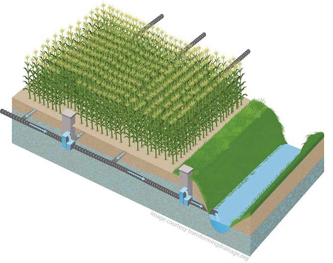 Controlled drainage during the growing season can capture and hold water from timely rains late in the growing season